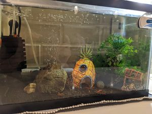 5L fish tank for Sale in Kirkland, WA