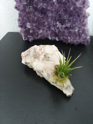 Beautiful Real Quartz Formation and Tillandsia Ionantha Air Plant. for Sale in Rancho Cucamonga, CA