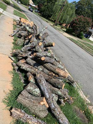 Oak Wood Tree for Sale in Lorton, VA