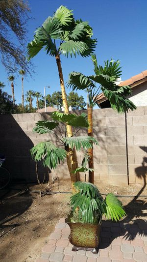 Large Beautiful Fake Palm for Sale in Henderson, NV