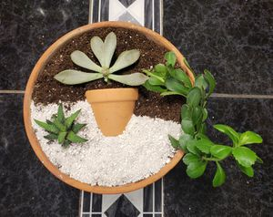Succulent pot for Sale in Coppell, TX