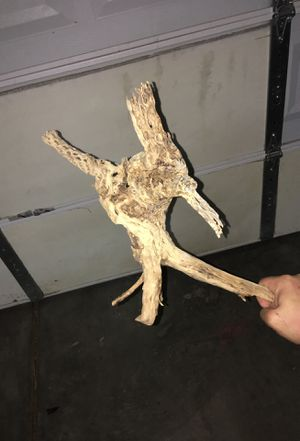 Cholla wood for Sale in Henderson, NV