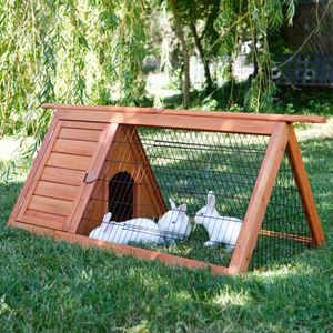 For a Chicken or a Bunny for Sale in Redmond, WA