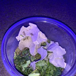 Cricket Colony For Reptiles/any Insectivore for Sale in Riverside, CA