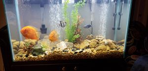 Free Fish Tank for Sale in Houston, TX