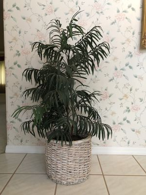 Fake indoor plant for Sale in New Smyrna Beach, FL