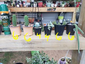 Cactus and succulents for Sale in Dallas, TX