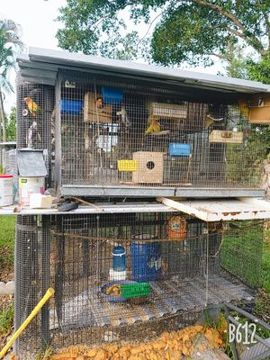 Bird cage for love birds for Sale in Plantation, FL