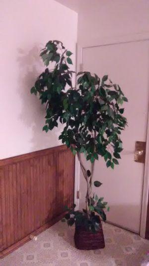 Fake plant for Sale in Stockton, CA