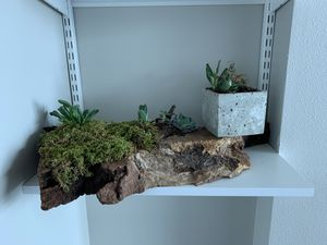 Set of Decorative Succulents on Wood / Concrete for Sale in Tampa, FL