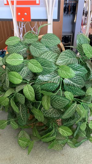Fake Plant for Sale in Chicago, IL