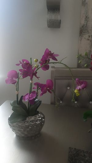 Orchids flower pots for Sale in Montclair, CA
