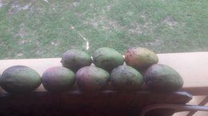 8 Jumbo size mango $10 for Sale in Hialeah, FL