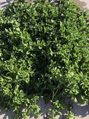 Succulents for Sale in Stockton, CA