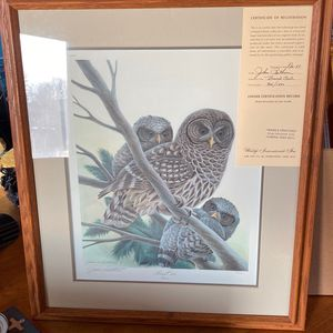 Barred Owl Print for Sale in Hamilton, OH