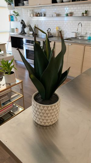 Fake Plant for Sale in Washington, DC