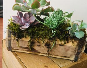 Succulent gardens for Sale in Kissimmee, FL