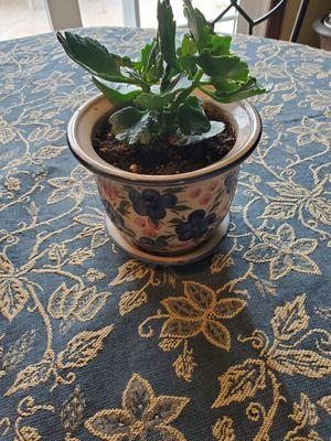 Pretty ceramic pot with healthy succulents for Sale in Chula Vista, CA