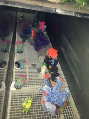 Fish tank decorations for Sale in Calimesa, CA