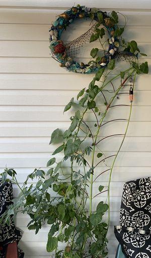 Plant trellis tomato& morning glory for Sale in Norfolk, VA
