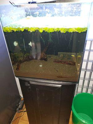 Aquarium 24 gal cube with internal filter for Sale in Bellflower, CA