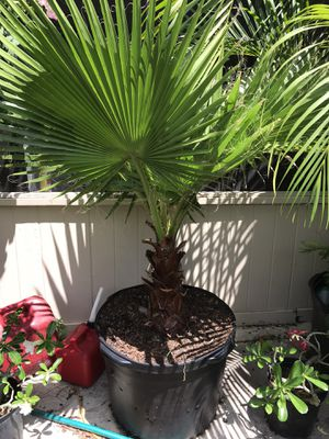 Plant for Sale in DeBary, FL