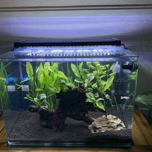 Fish Tank 10 Gallon Rounded Edges for Sale in La Puente, CA