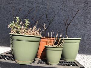 5 plastic pots for Sale in Phoenix, AZ