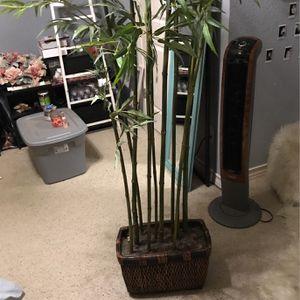 Plant for Sale in Keller, TX