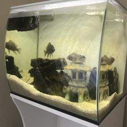 Fish Tank for Sale in Hayward,  CA