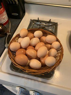 Fresh organic chicken eggs for Sale in Harrisburg, PA