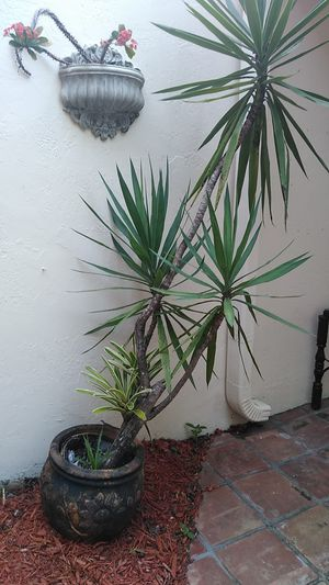 Plant and potted moving needs a home for Sale in Fort Lauderdale, FL