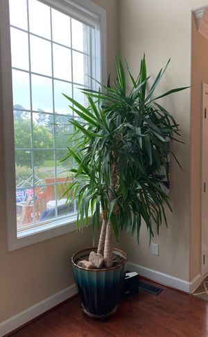 Large House Plant for Sale in Portsmouth, VA