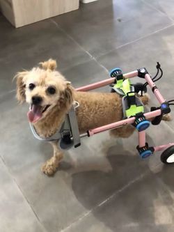 Pet Wheelchair/paralysis Dog Scooter/dog Rehabilitation Wheelchair for Sale in Indianapolis,  IN