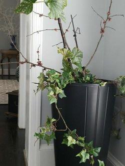 "2"" Tall Planter for Sale in Fairfax,  VA"