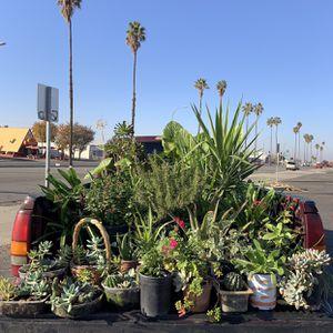 Plants / Plantas [ $3 - $30 ] for Sale in Bakersfield, CA