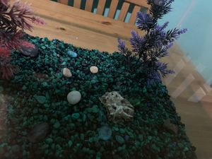 10 gallon fish tank for Sale in Queens, NY