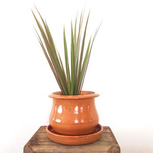 Live Dracaena House Plant in Vintage Ceramic Pot (with drainage tray) for Sale in Phoenix, AZ