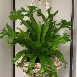 Vintage Seashell Chandelier Plant Holder for Sale in New York, NY