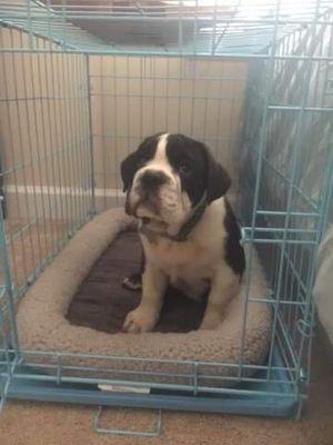 Medium size dog crate for Sale in Alexandria, VA
