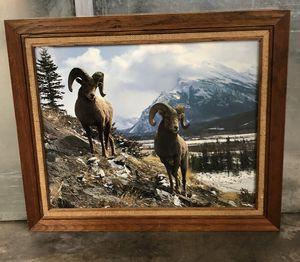 Ram Mountain scene framed photograph for Sale in Denver, CO