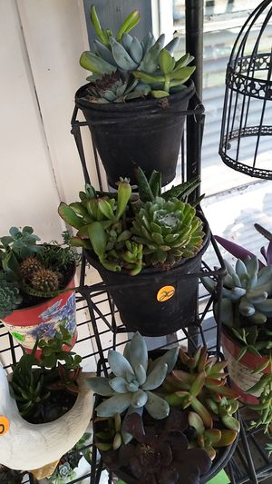 Water plants for Sale in Selma, CA