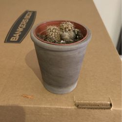 Small Potted Cactus for Sale in Washington,  DC