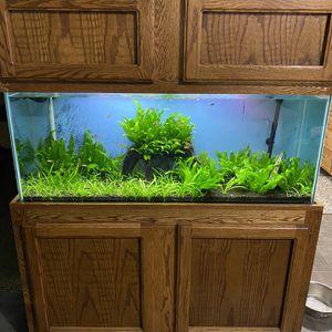 55 Gallon Planted Aquarium With Fish for Sale in Sacramento, CA