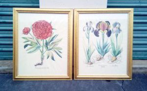 Pair Old Framed Botanical Prints for Sale in Atlanta, GA
