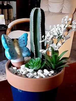 Pretty cactus and succulent garden for Sale in Mesa, AZ