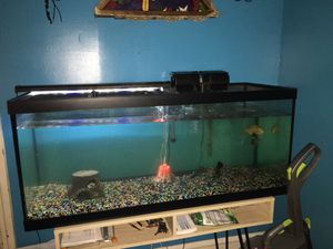 125 gallon tank with fish for Sale in Columbia, PA