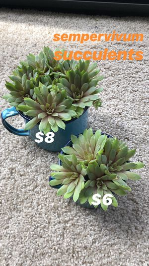 Various house plants for Sale in Chicago, IL