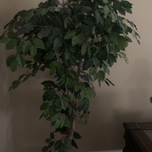 Artificial Plant 6 Feet Tall. Perfect Condition . for Sale in Bakersfield, CA