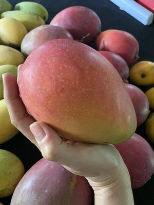 For Anna: Special box Haden Mangos. 20 lbs for Sale in Miami Lakes, FL